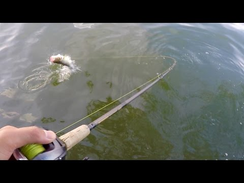 Feast or Famine - Summer Bass Fishing (ft. ExtremePhillyFishing)