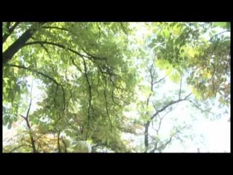 Zlatica - O Filme