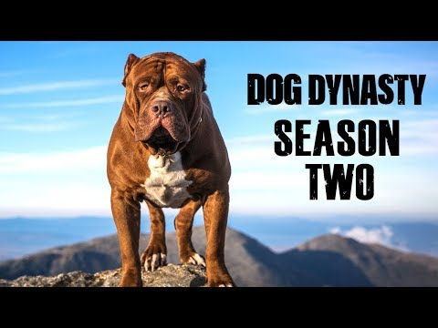 Dog Dynasty: Entire Season Two (1 Hour)