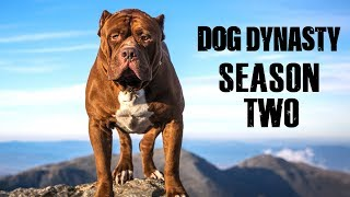 dog-dynasty-2-the-entire-series