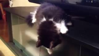 テレビ台から落ちそうになりながら寝る猫【ゆきちゃんwithばーさん】