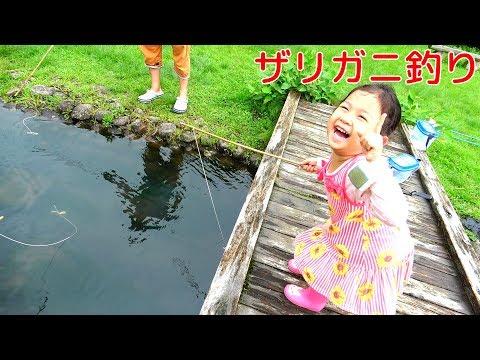 入れ食い状態!?ザリガニ釣りでママが大騒ぎww himawari-CH