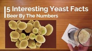 5 Interesting Facts about Beer Yeast
