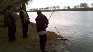 Sacramento River Sturgeon Fishing