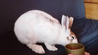 Заяц - беляк по имени Зосик выпрашивает глюконат кальция