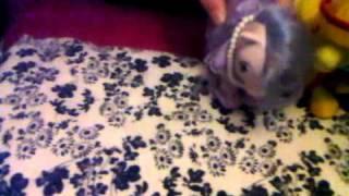 Dressed Like A Dream - My Little Pony