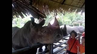 Кормим носорогов Зоопарк часть 2 Тайланд Паттайя