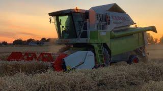 #240-  Kolejne pole pszenicy! Już znamy parametry! Jest dobrze ?! Złociste łany🌾
