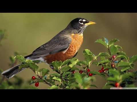 Wake up! Listen! Rest...(Poems for children. Birdsong poem. Sleep poetry)