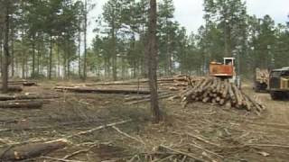 Timber Harvest: Thinning