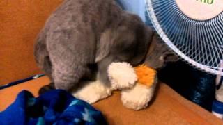 Котэ насилует собаку