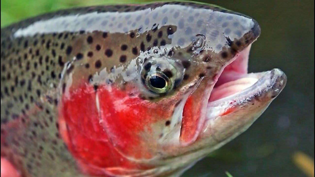 Fish lake utah gone fishing youtube for Utah fishing regulations