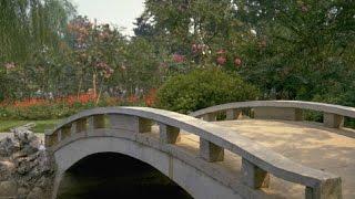 Фото слайд-шоу Мосты на Природе.