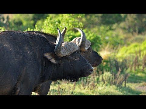 South Africa Travel Kariega and Knysna