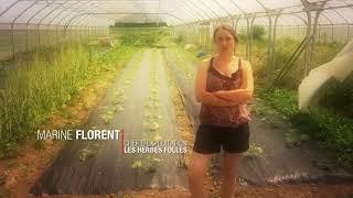 #50ansMEL : Agriculture