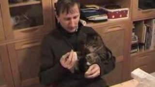 Cat eating bread