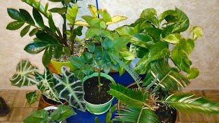 Комнатные растения, которые меня радуют. Обзор комнатных растений. Сентябрь 2019. Часть 1.