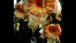 Brad Paisley FLOWERS