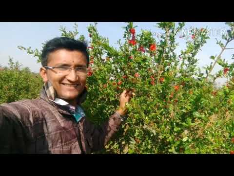 Promogrent flowering stages organic agriculture