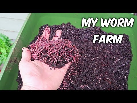 My Worm Farm