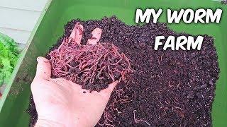My Worm Farm