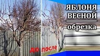 Весенняя обрезка яблони Подробно Видео и фото крупным планом