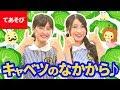【♪うた】キャベツのなかから〈振り付き〉【手あそび・こどものうた】Japanese Children's Song, Nursery Rhymes & Finger Plays