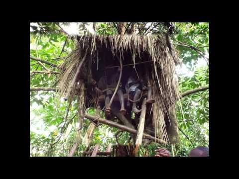 Belinda and Michael Visit Bwindi Impenetrable Forest and National Park