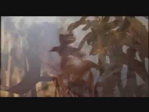 The Messengers 2: The Scarecrow (2009) Trailer Ingles