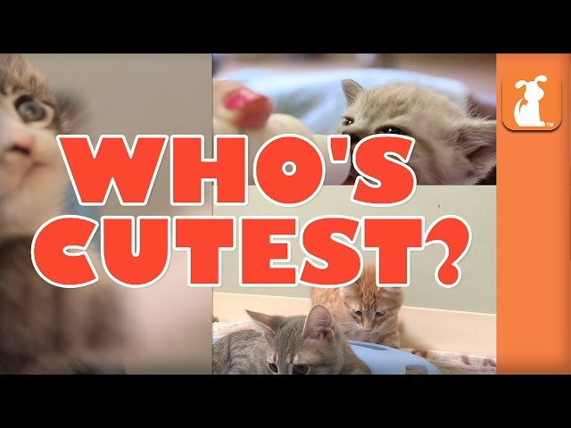 WHO'S CUTEST? YOU DECIDE! Which Kitten Is The Cutest? (Episode 6)