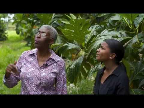 "Dr. Roberts-Nkrumah, University Of The West Indies: ""Talking Breadfruit"""