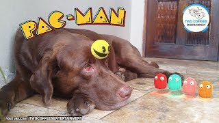Pacman in real life 14