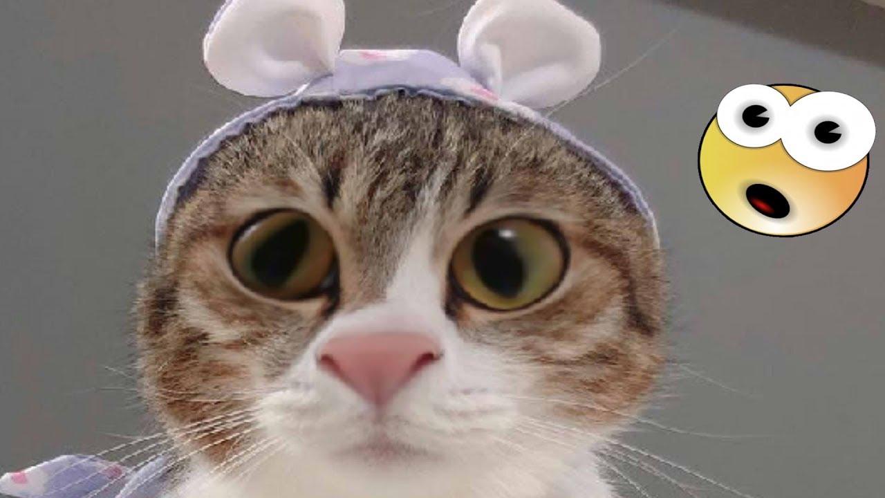 ютуб коты приколы про происхождение одного