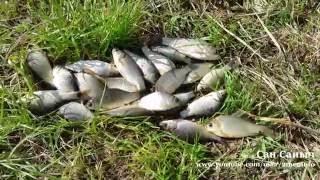 Рыбалка на карася, ловим на поплавок