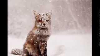 Животные в снегу| Милые картинки