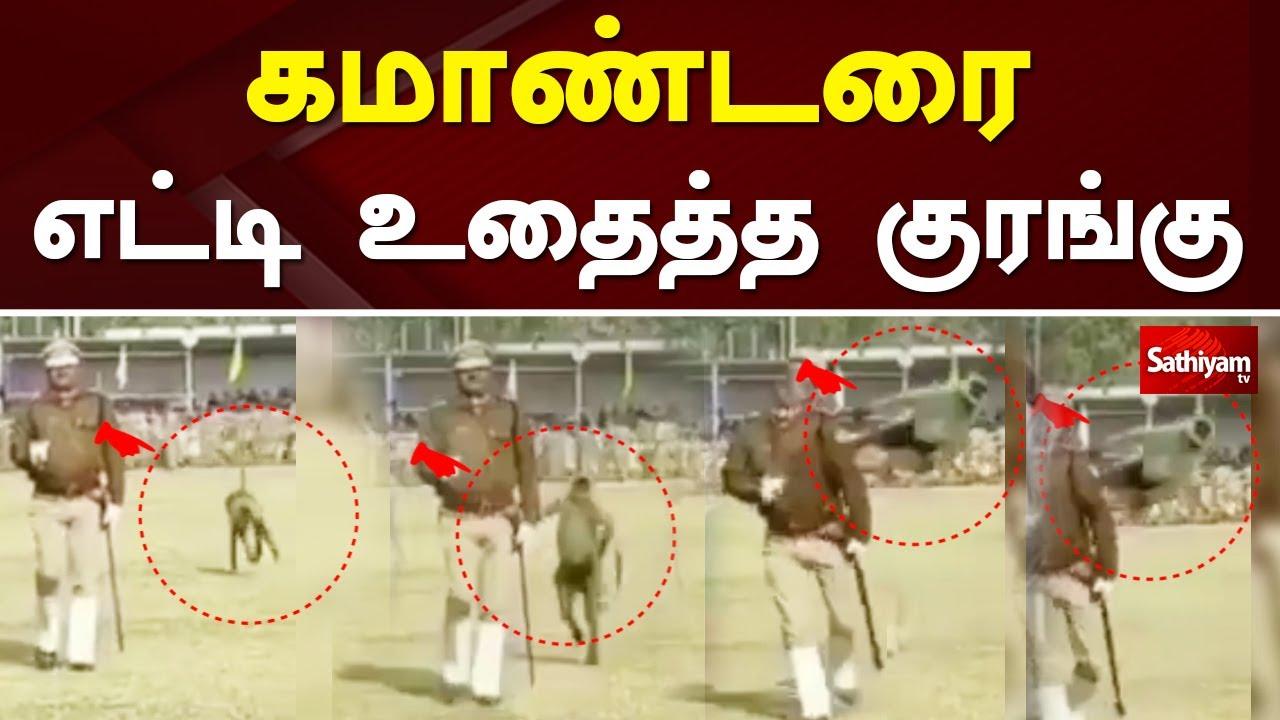 Download கமாண்டரை எட்டிஉதைத்த குரங்கு   Web Special   Monkey Viral Video   Monkey Funny Video   Sathiyamtv