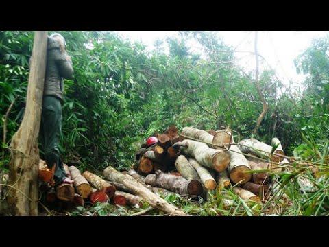 """Che mắt Thủ tướng, """"cứu rừng"""" thành phá rừng"""