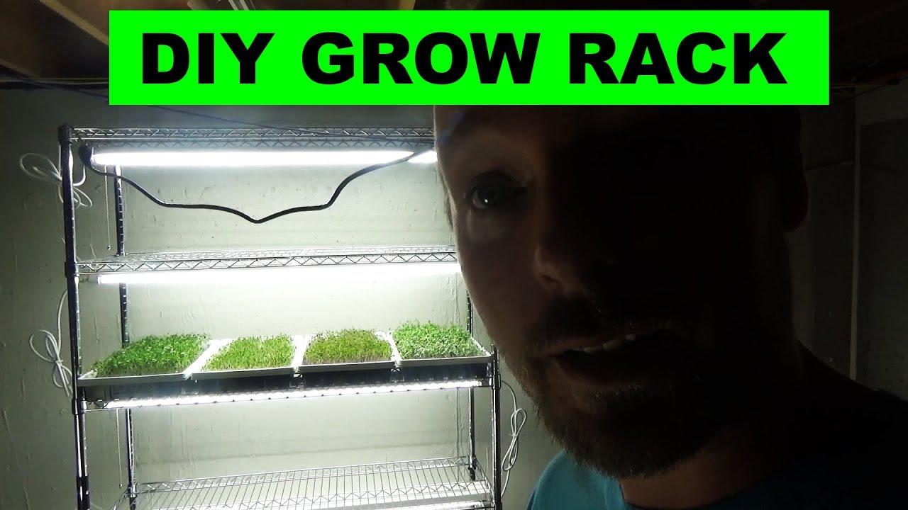 Low Cost Indoor Diy Microgreens Setup Grow Daddy