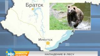 Медведь напал на женщину в окрестностях Братска