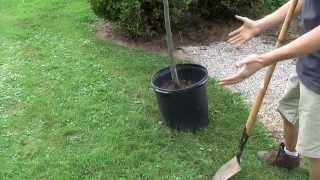 Planting Tree In The Fall - Part 1 Of 4