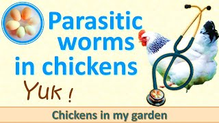 Yuk! I find a worm in my chicken's poo!