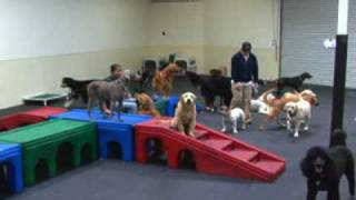 Paws Pet Resorts Stay And Play With Us!
