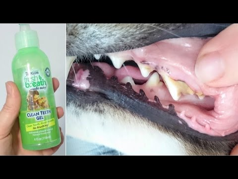 Hoow To Make Fresh Breath For Dogs