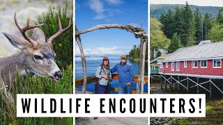 NORTH VANCOUVER ISLAND TRIP | Visiting Port Hardy + Port McNeill + Telegraph Cove, BC