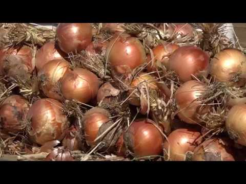 ONDA LIVRE TV - Feira das cebolas em Chacim