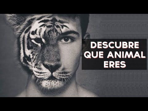 ¿Qué animal eres? | Test Divertidos