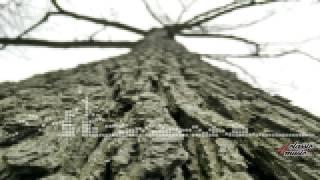 [8 bit] J. S. Bach - Aria (Tenor): Unser Mund und Ton der Saiten [Johann Sebastian Bach]
