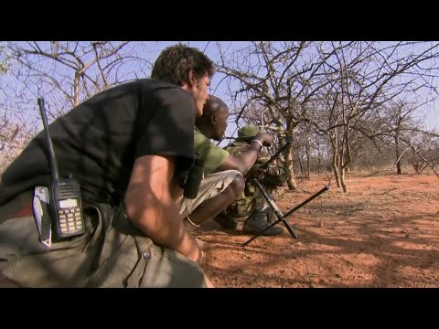 Tracking A Bull Elephant In The Bush - This Wild Life - BBC Earth