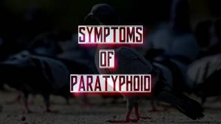 Pigeon Diseases and Treatment part 1