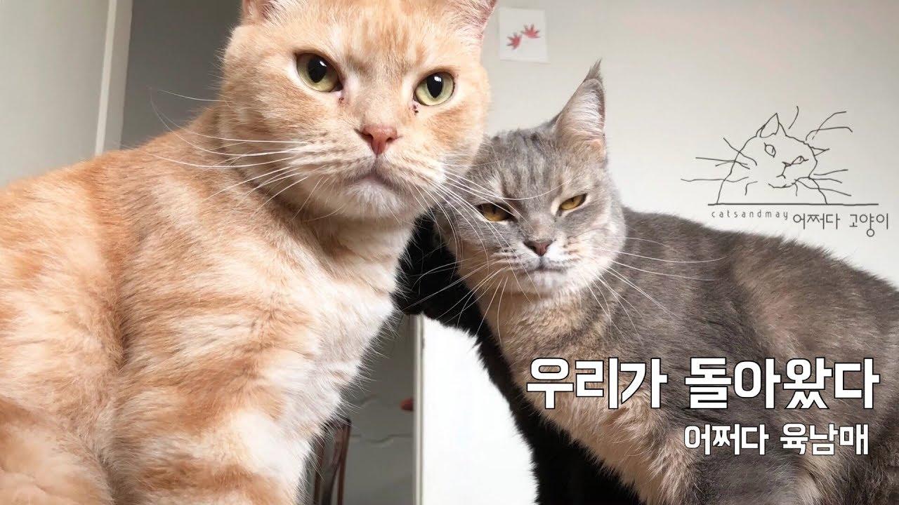 돌아온 육남매, 어쩌다 고양이! Six Cat Families